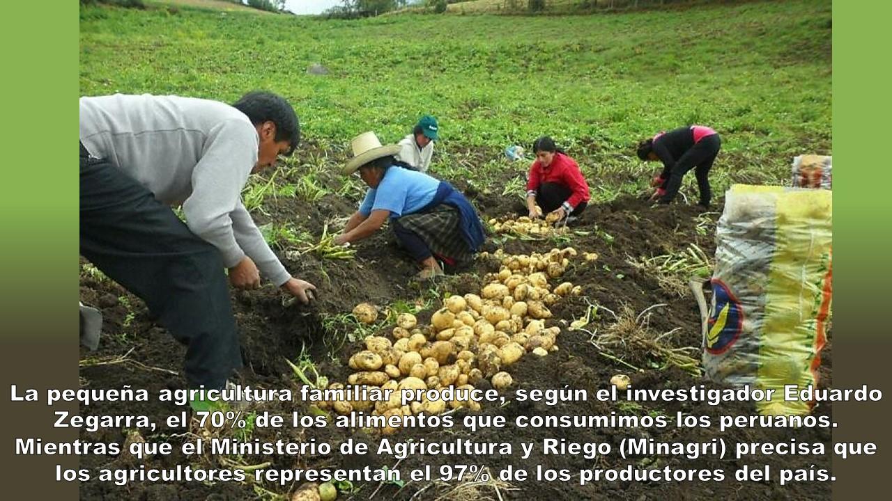 SITUACIÓN DE LA AGRICULTURA FAMILIAR EN EL PERÚ 2020